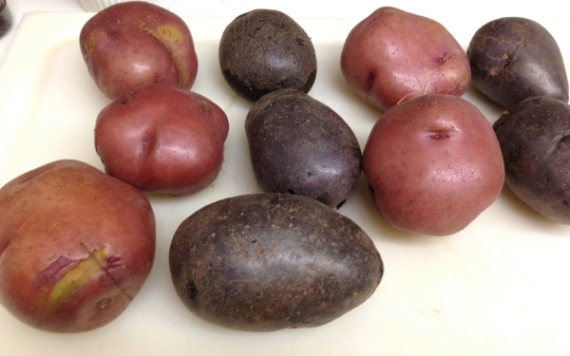 Red and purple potatoes give this potato salad an nice color contrast.